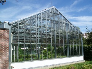 York U Greenhouse